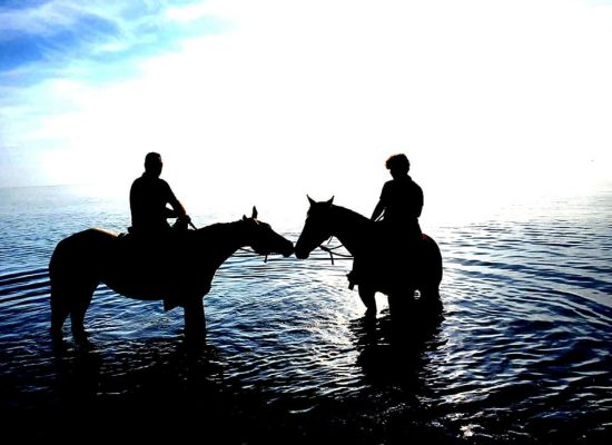 cavallo 3